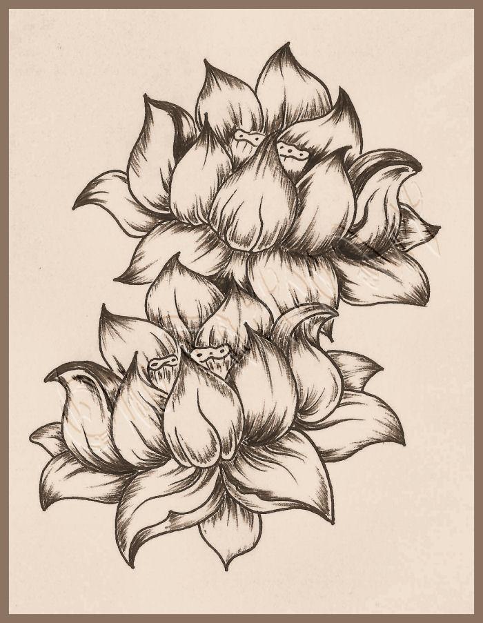 Fleurs de lotus0003
